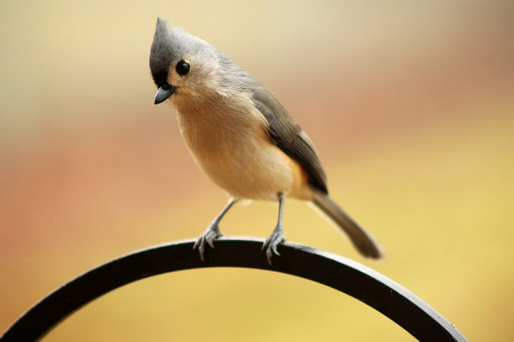 A bird perched on a fence.
